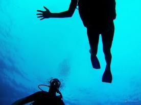 Sous l'eau de la Martinique-1