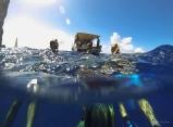 Sous l'eau de la Martinique-14