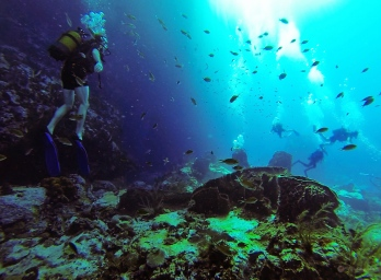 Sous l'eau de la Martinique-16