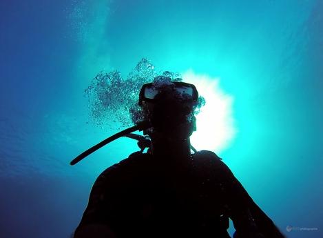 Sous l'eau de la Martinique-27