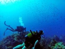 Sous l'eau de la Martinique-28