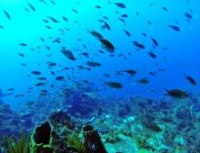 Sous l'eau de la Martinique-29