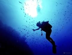 Sous l'eau de la Martinique-31