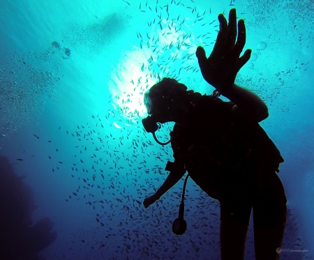 Sous l'eau de la Martinique-33