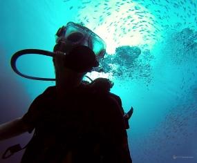 Sous l'eau de la Martinique-34