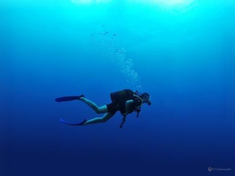 Sous l'eau de la Martinique-4