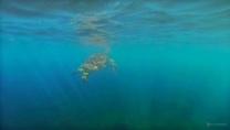 Sous l'eau de la Martinique-41
